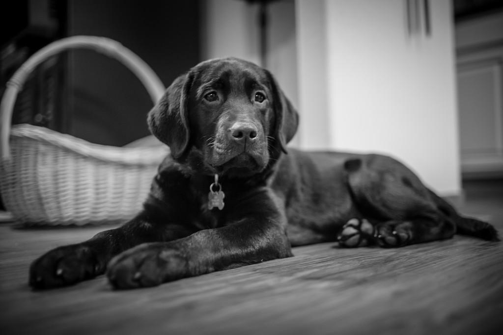 IMAGE: https://averymckenna.smugmug.com/Pets/Dogs/i-88C3VBn/0/XL/IMG_4905-XL.jpg